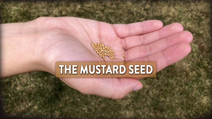 Short Stories, Big Lessons: The Mustard Seed
