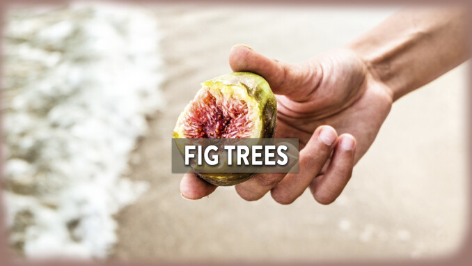 Short Stories, Big Lessons: Fig Trees