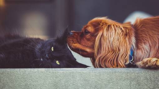 Do you have a pet therapist?